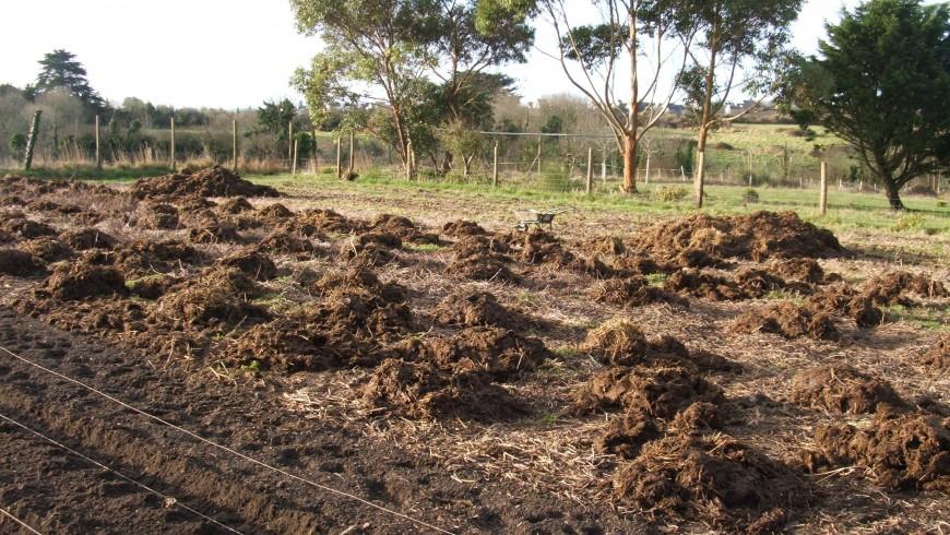 Couche chaude jardiner au naturel - Le fumier de cheval est il bon pour le jardin ...